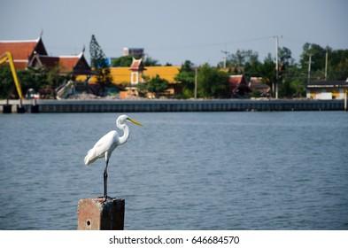 white bird stand near the river