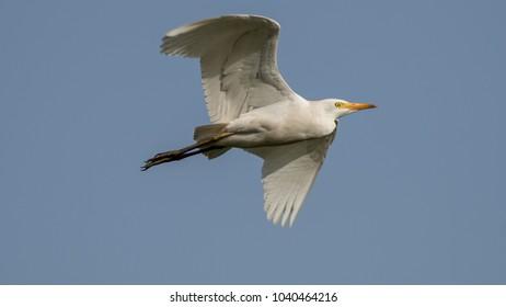 White bird in the wild