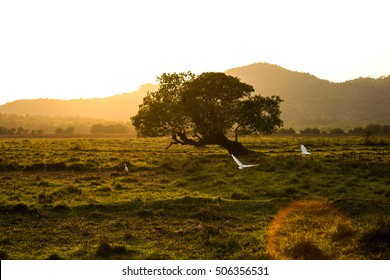 White birds are flying towards the sun in the field of Goa, India