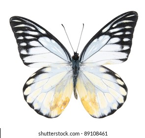 White and black butterfly on  isolated  white background