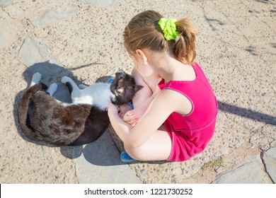 white and black cat rubbing, caressing or stroking with leg of five years old girl with pink dress, sitting on the ground of street, in Summertime