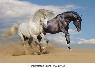 Silver Gray Andalusian Horse Desert Toned Stock Photo Edit Now