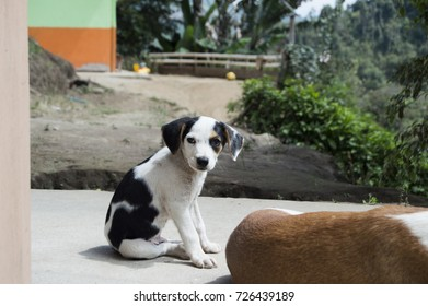 White and black puppy dog sitting on its back legs on the floor looking directly