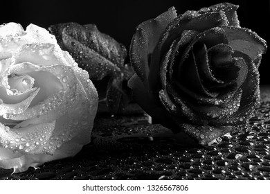 White and black roses in drops of water