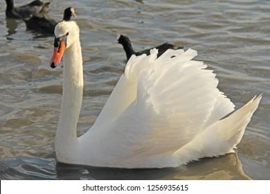 Bigbird Images Stock Photos Vectors Shutterstock