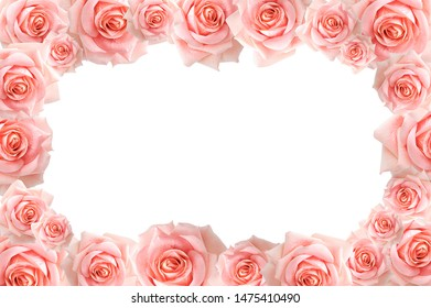 White blank background with pink roses. Isolate
