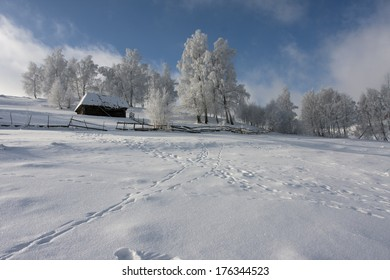 White and blue winter landscape with trees and clouds