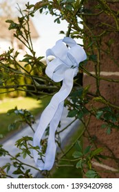 White bowknot tied to the thorn bush rose hips.