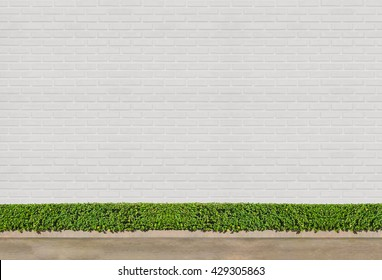 white brick wall concept : Green Bushes fences at white brick wall background with concrete floor at walk way