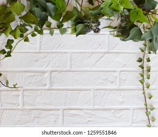 White Brick wall with green ivy branches. View with copy space