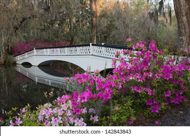White bridge and azaleas at the Magnolia Plantation in Charleston, SC.