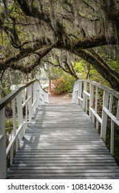 White Bridge Crosses Under Spanish Moss on live oak tree