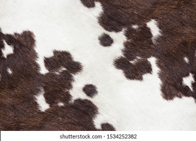 White and brown cowhide texture.