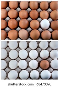 white and brown eggs collage duality, representing visible minority