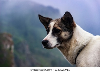 A white and brown laika dog with a thoughtful look standing on a foggy mountain background, photo with a copy space