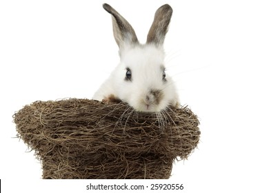 White bunny inside a nest, isolated on white
