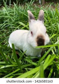 White bunny rabbit in monkey grass