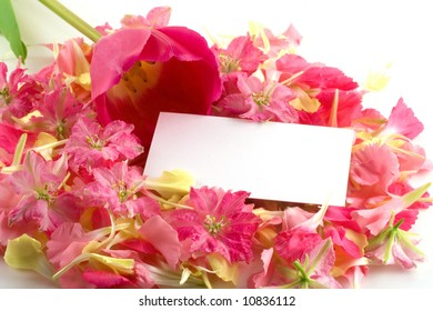A white business card rests on a bed of pink and yellow petals with a lovely tulip resting nearby.