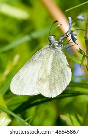 white butterfly against a green background