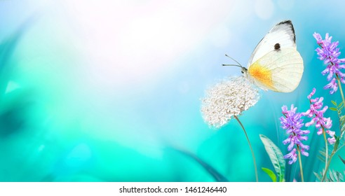 White butterfly close-up macro on wild meadow fluffy flower in spring summer on a beautiful soft blurred blue turquoise background. Gentle artistic image of nature, copy space.