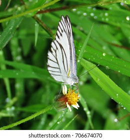 White butterfly with flowers