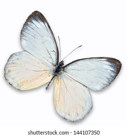 White Butterfly flying isolated on white background