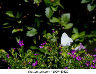 White Butterfly in front of Violet Flowers and Green Leaves