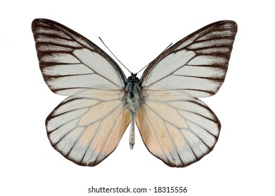 White butterfly isolated on white