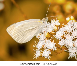 White butterfly on white flowers with artistic background