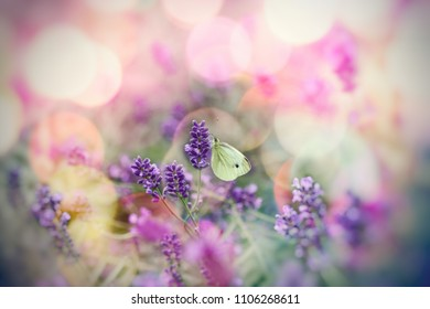 White butterfly on lavender flower, selective focus on butterfly - beautiful nature, beauty in nature