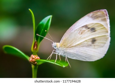 White butterfly on leaf close up