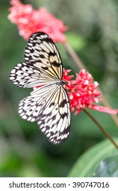 white butterfly on plants