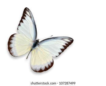 white butterfly (yellow spotted) isolated on white background