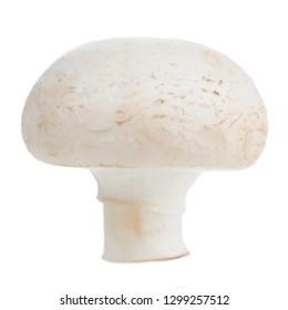 White Button Mushroom (Champignon) Isolated on White Background