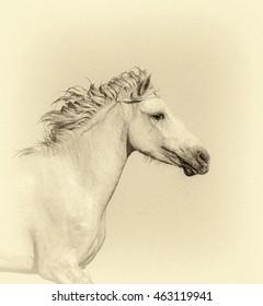 White Camargue Horse in the Parc Regional de Camargue - Provence, France (stylized retro)
