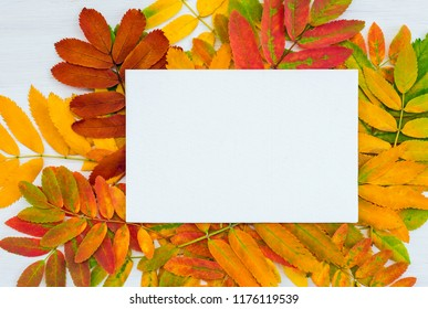 White canvas with copy space on colorful ashberry tree leaves background. Autumn inspiration.