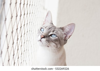 White captive cat looks outside safety net
