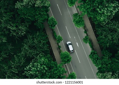 White car driving along the shady road way with branches of big tree.