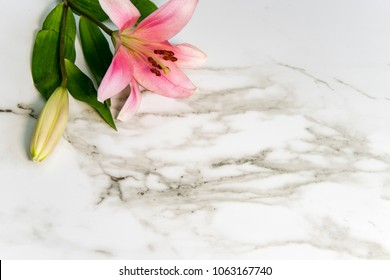 White carara marble kitchen countertop with lily flower on it