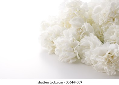 White carnation images stock photos vectors shutterstock white carnation mightylinksfo