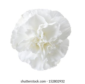 White Carnation Images Stock Photos Vectors Shutterstock