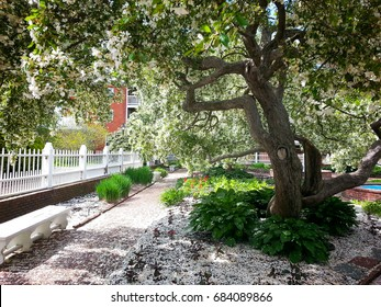 A white carpet of petals from a tree in springtime in a public park in Portsmouth, New Hampshire
