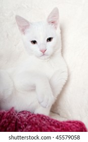 White cat in white armchair