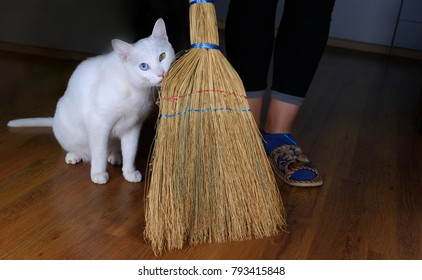 White cat assistant for Cleaning and sweeping room use broom