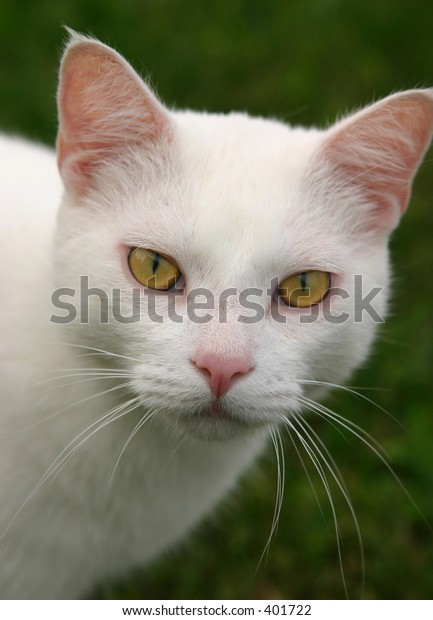 White Cat With Attitude