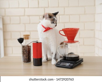 White cat barista. Alternative manual hand brewing coffee. Drip batch filter. Red coffee grinder. Electronic scale. Light coffee shop