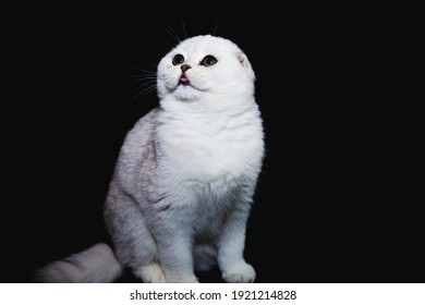 A white cat with a black ground seeking to play and staying curious