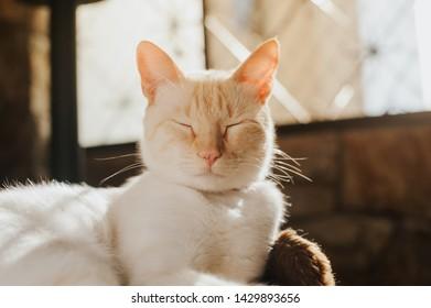 white cat black, cat muzzle, hair, resting in the sunset cat in the scratcher