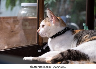 White cat with black scarf looking out of window