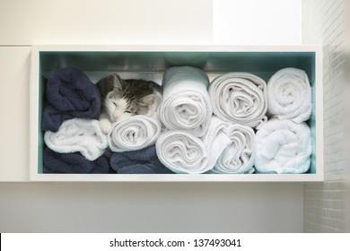 A white cat in a blanket closet
